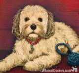 20cm Metal old style Beige Cockapoo Cocker Poodle breed character hanging sign
