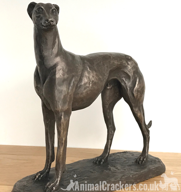 'Gus' large bronze Greyhound figurine ornament sculpture statue by Harriet Glen