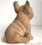 Vivid Arts 'Pet Pals' Golden French Bulldog Puppy ornament, Frenchie lover gift, in presentation gift box
