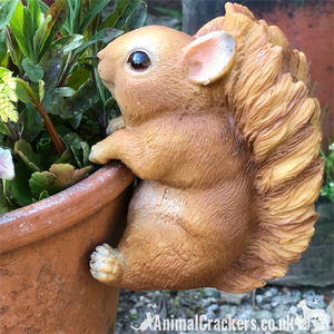 SQUIRREL Pot Pal POT HANGER novelty garden ornament decoration garden lover gift