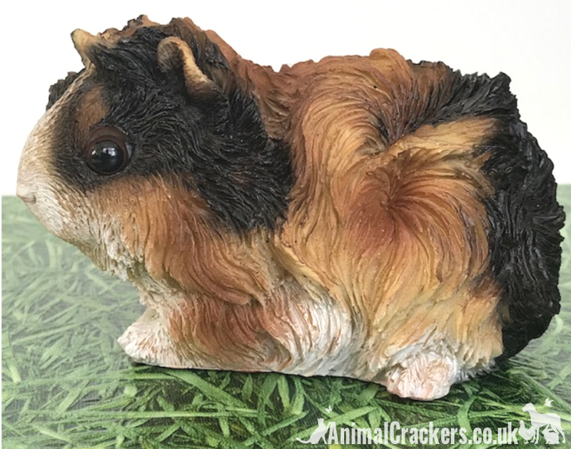 Cute Tortoiseshell long haired Guinea Pig ornament