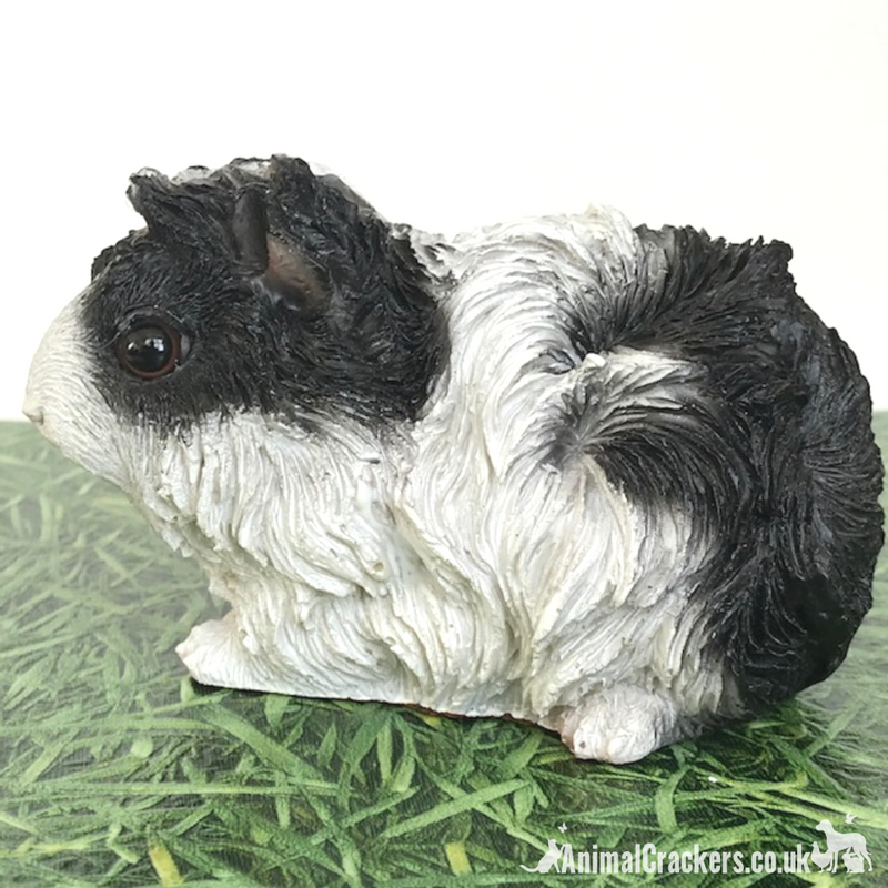 Cute Black & White long haired Guinea Pig ornament