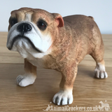 English Bulldog ornament figurine sculpture decoration Leonardo range gift boxed