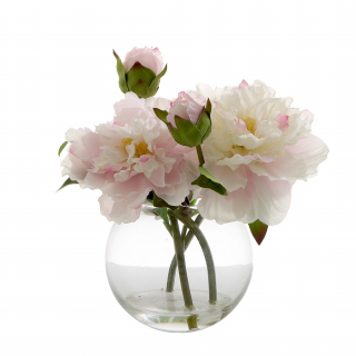 Peony in Water Bowl Light Pink