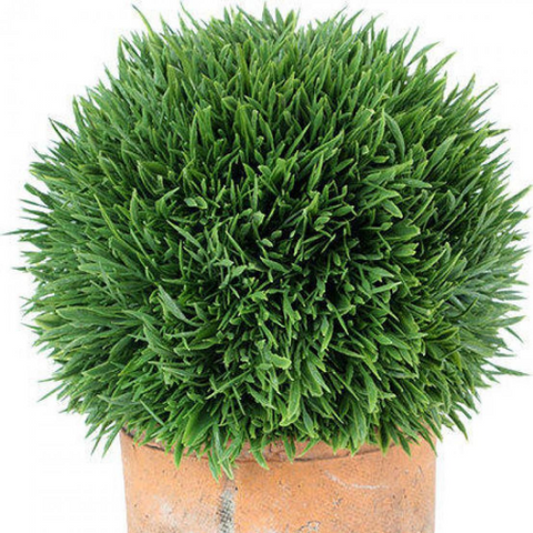 Artificial Plant Spikey