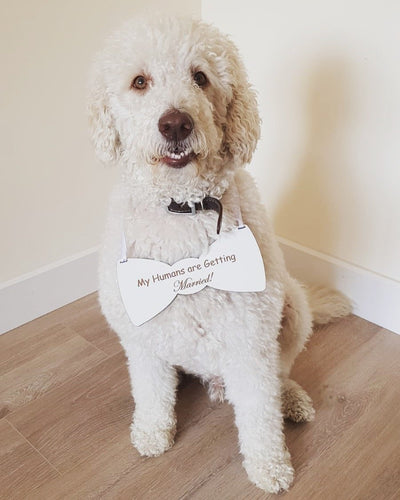 My Humans are Getting Married Dog Sign
