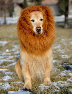 Lion Mane Wig for Dog
