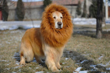 Load image into Gallery viewer, Lion Mane Wig for Dog