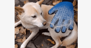 Magical Pet Touch Grooming Gloves - FREE SHIP DEALS