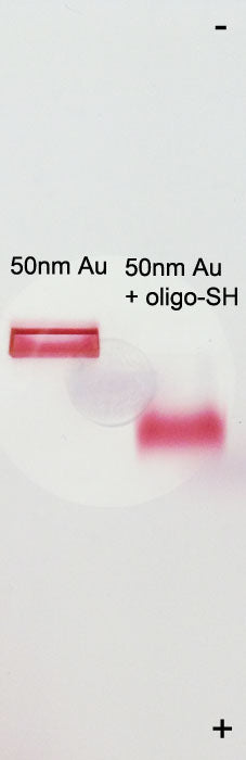 Agarose Gel Analysis of Conjugated OligoREADY Gold Nanoparticles