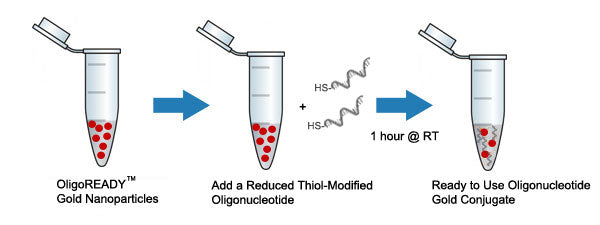 Conjugation of Oligonucleotides to Gold Nanoparticles - Schematic image