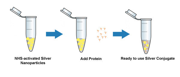 NHS-Activated Silver Nanoparticles Conjugation
