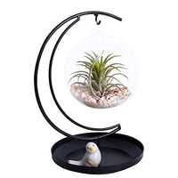 Glass Vase Plant Terrarium with Black Metal Tray Stand, Ornament Display Stand, Office Desktop - BEAN Ultra