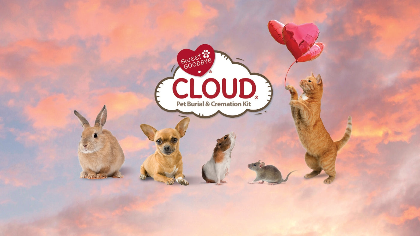 CLOUD for Smaller Pets