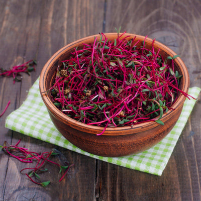Exploring the Nutritional Values and Health Benefits of Beetroot Sprouts