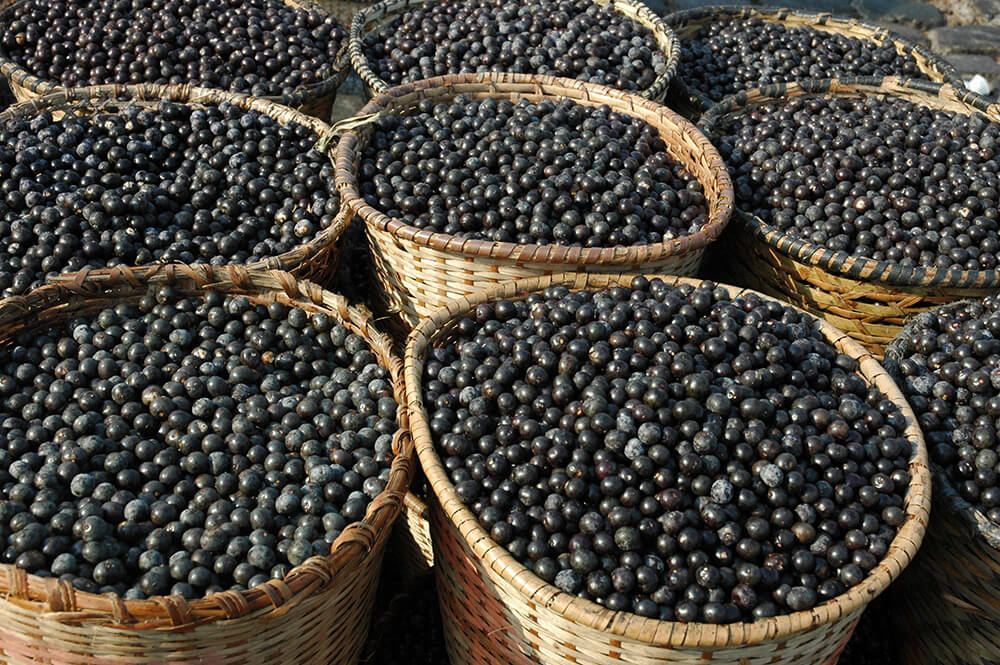 Amazing Acai Berries for Boosting Health