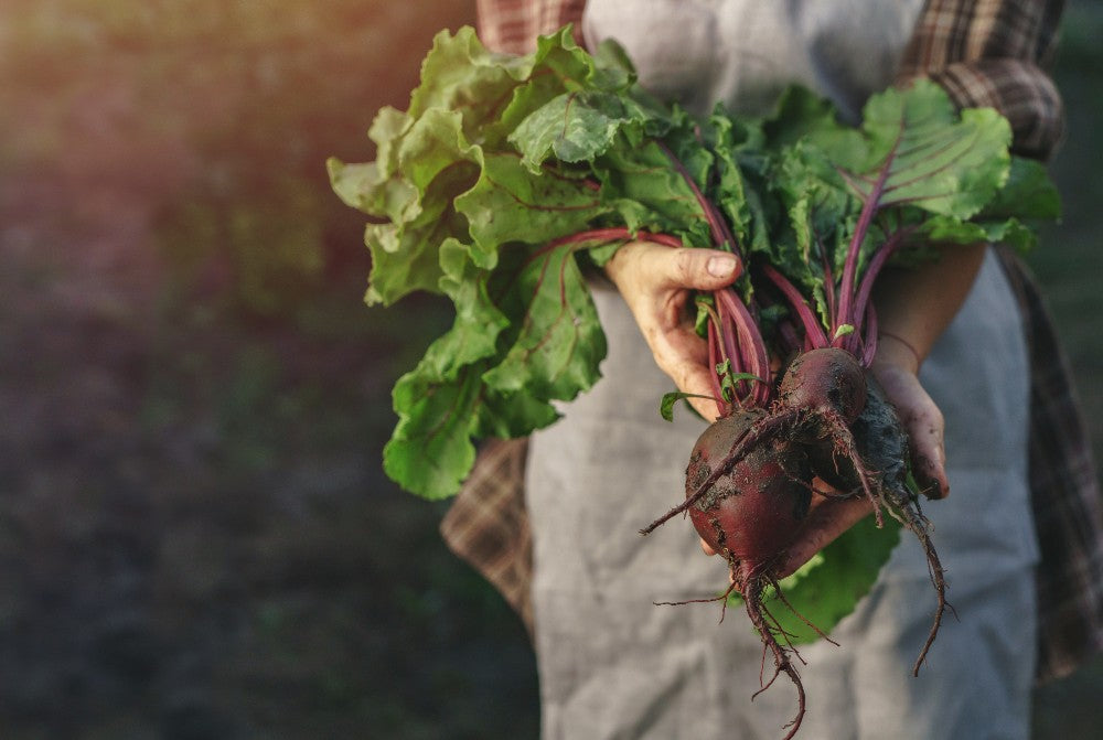 beetroot and low blood pressure - lifestyle
