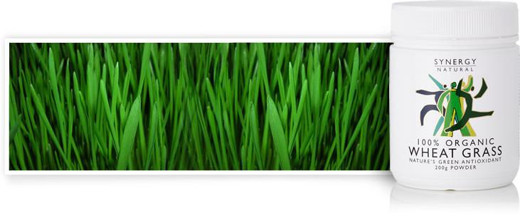 Synergy Natural Wheatgrass organico (polvere)