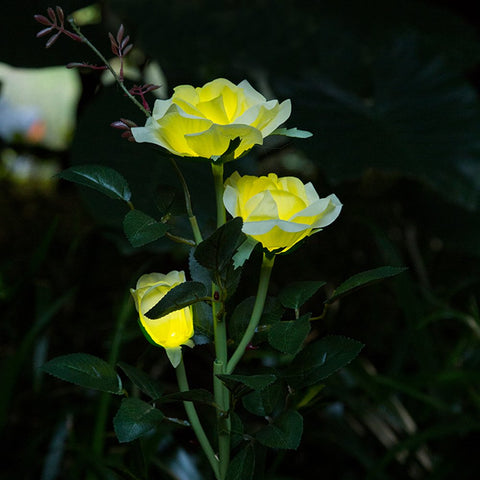 Solar Powered LED Rose Light