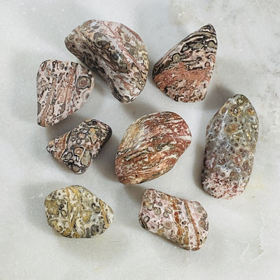 Leopardskin jasper tumbled stones for grounding the root chakra