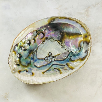 Abalone shell for rituals