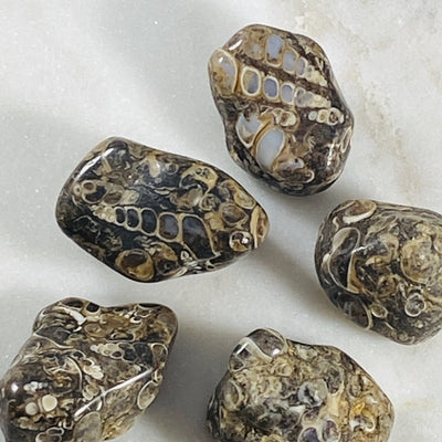 Turritella Agate Healing Crystal for Protection and Ancient Wisdom