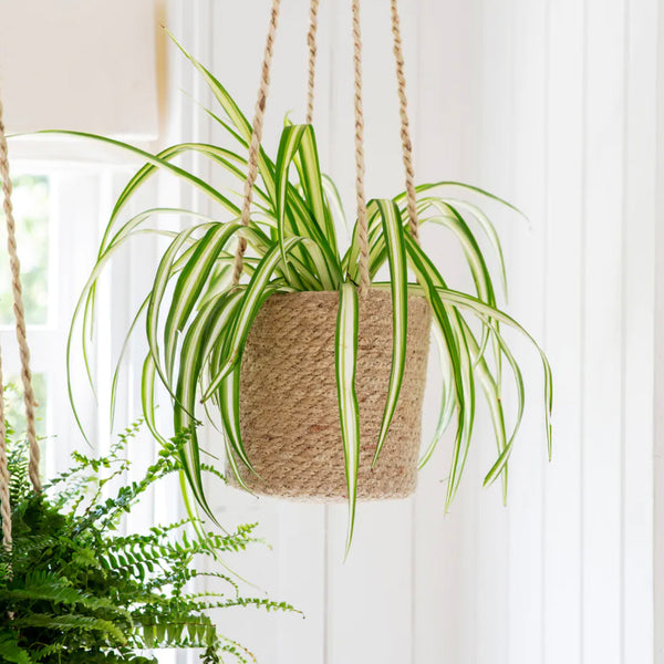 Tall Jute Hanging Plant Pot