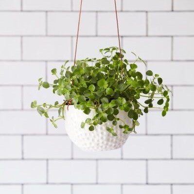Hanging House Plant Pot - Dotty