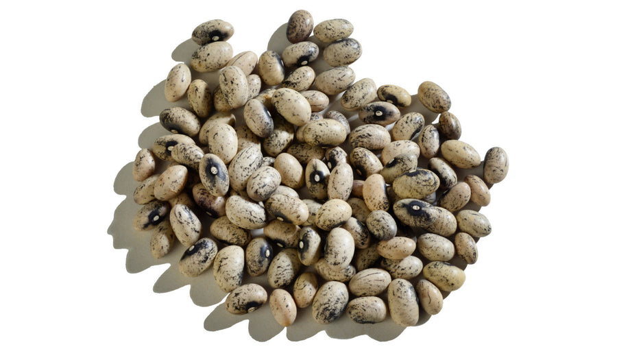 Speckled Tan Nuna Beans - 600 Grams Jar