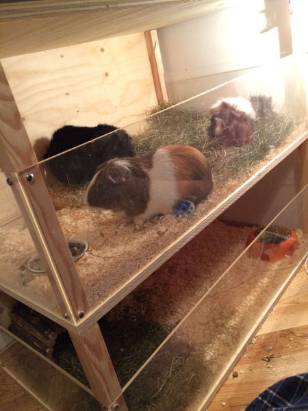 Excellent Wooden Guinea Pig Cage