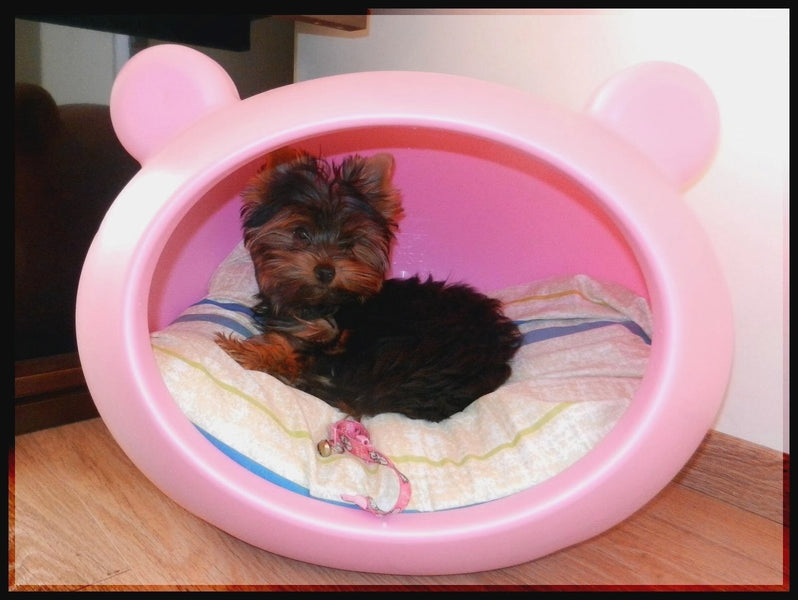 Modern Contemporary Girl Dog Beds