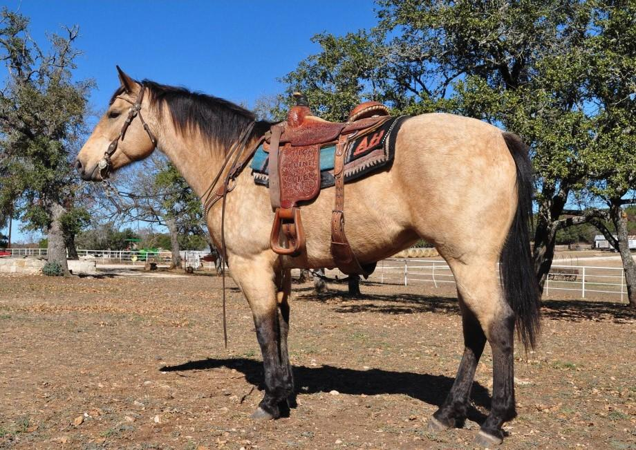 How to Saddle a Horse Using a Western Saddle | Horse Tack Online, LLC