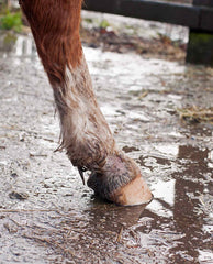 mud fever treatment for horses
