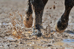 Natural treatment for mud fever in horses
