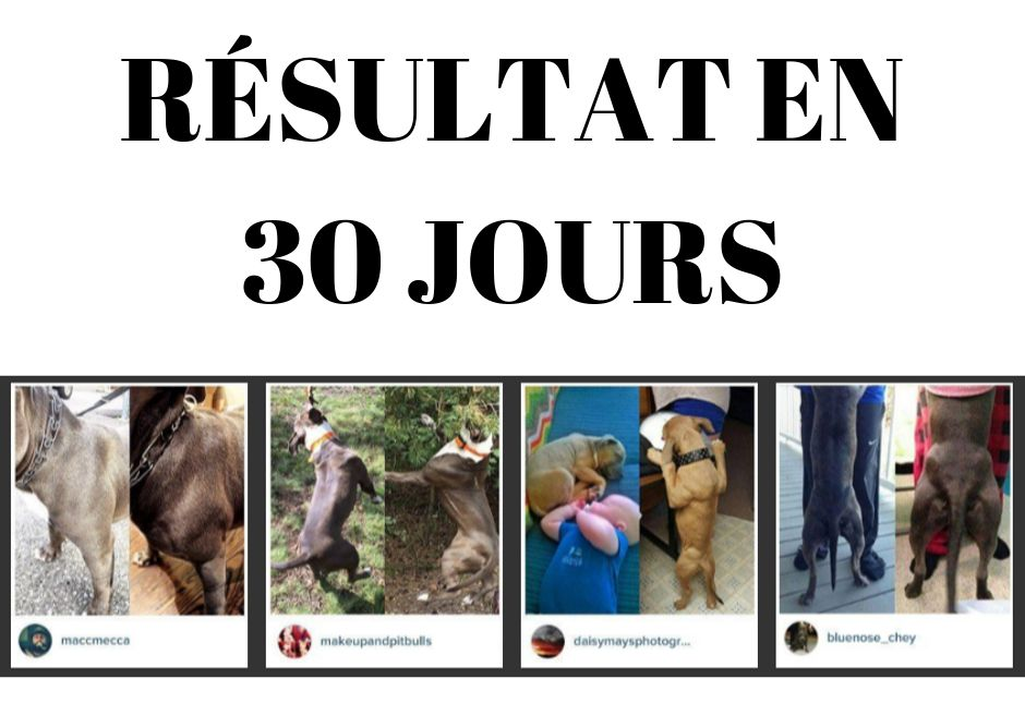 resultat proteine pour chien bully max