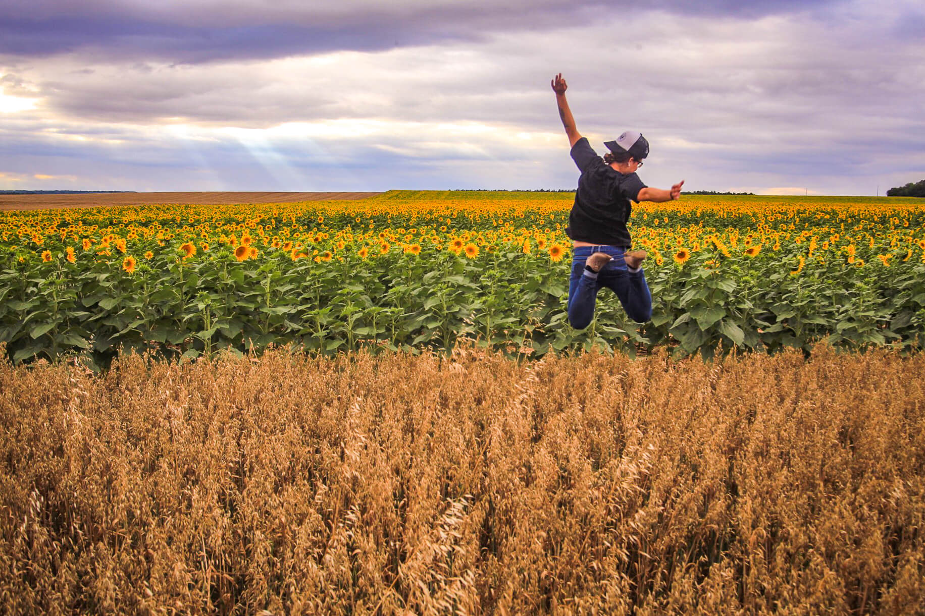Ash jumping near sunflower field