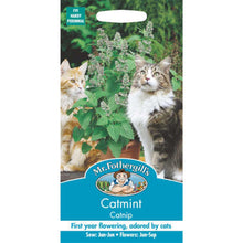 Load image into Gallery viewer, Catmint (Nepeta Cataria) Seeds- By Mr Fothergills