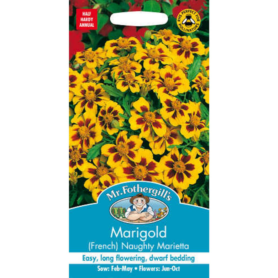 Marigold (French) Naughty Marietta Seeds - By Mr Fothergills