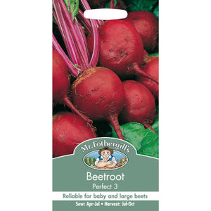 Beetroot Perfect 3 Seeds- By Mr Fothergills - Bells Gardening