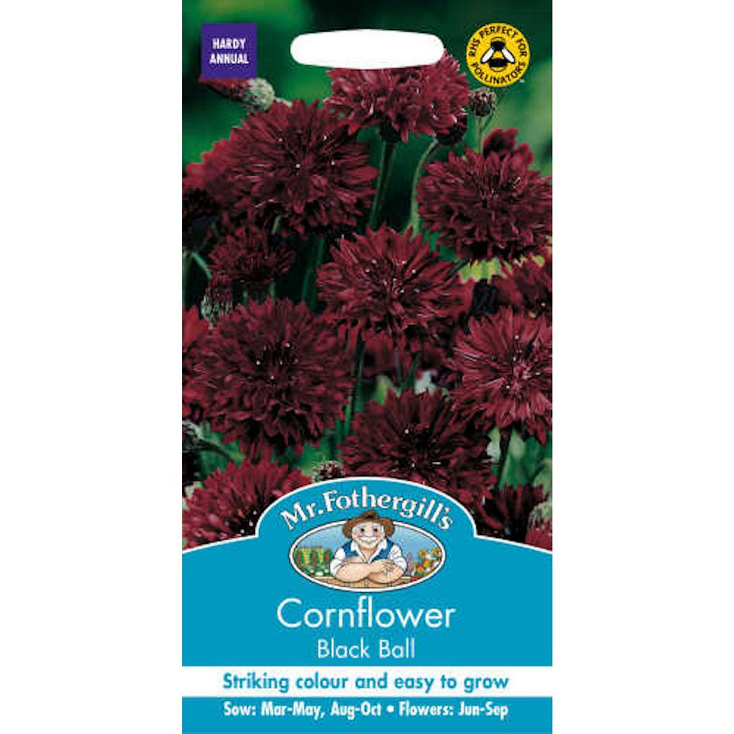 Cornflower Black Ball Seeds- By Mr Fothergills