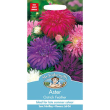 Load image into Gallery viewer, Aster Ostrich Feather Seeds- By Mr Fothergills - Bells Gardening