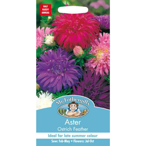 Aster Ostrich Feather Seeds- By Mr Fothergills