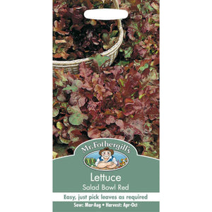 Lettuce Salad Bowl Red Seeds- By Mr Fothergills