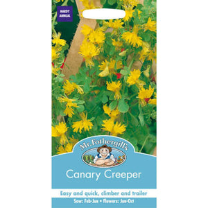 Canary Creeper Seed- By Mr Fothergills - Bells Gardening