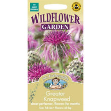 Load image into Gallery viewer, Greater Knapweed Seeds- By Mr Fothergills
