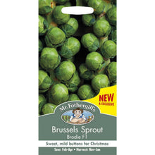 Load image into Gallery viewer, Brussels Sprout Brodie F1 Seeds- By Mr Fothergills