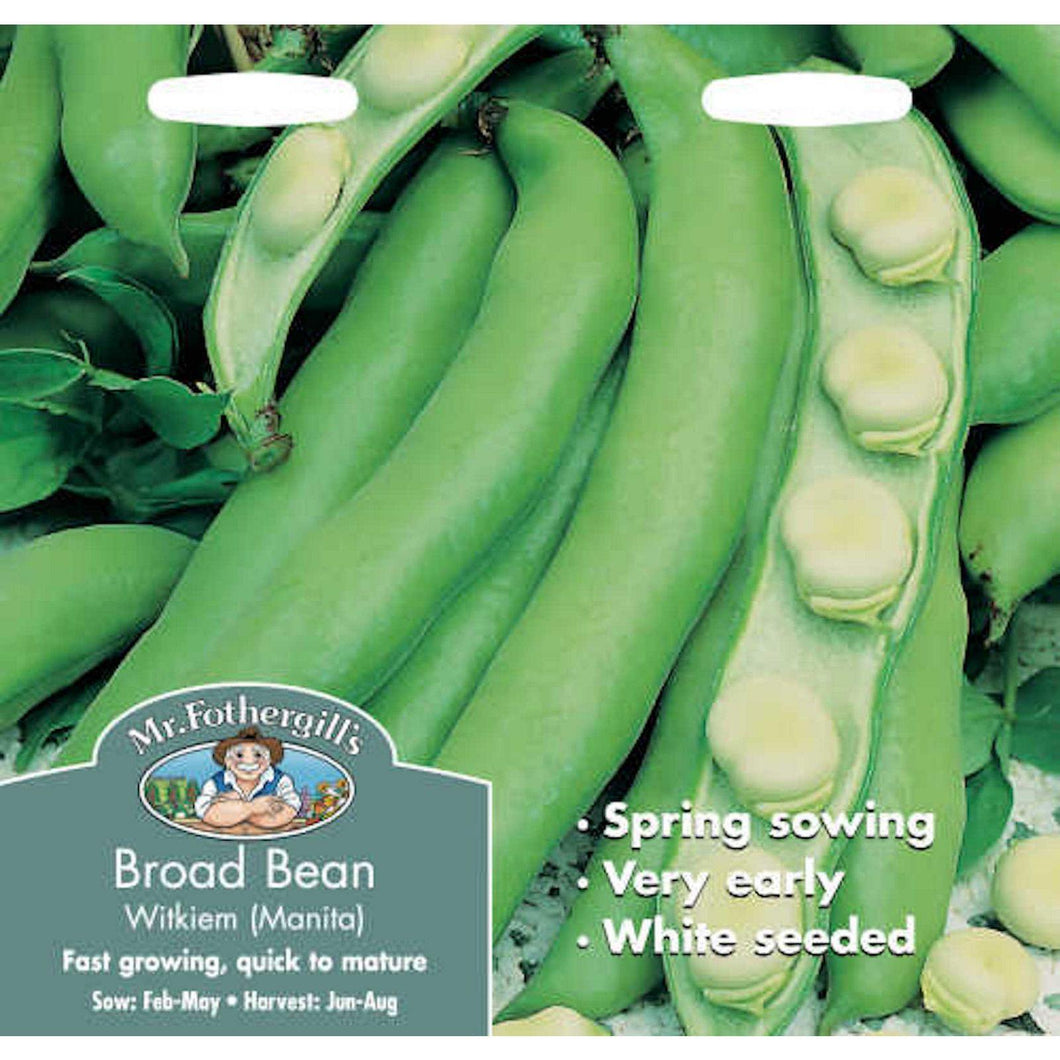Broad Bean Witkiem Manita Seeds- By Mr Fothergills - Bells Gardening