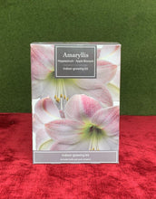 Load image into Gallery viewer, Amaryllis Hippeastrum Indoor Grow Kit