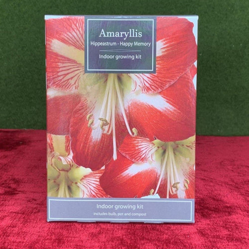 Amaryllis Hippeastrum Indoor Grow Kit - Bells Gardening