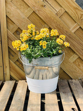 Load image into Gallery viewer, Large Nemesia Filled Zinc Bucket 30cm - Colour Options